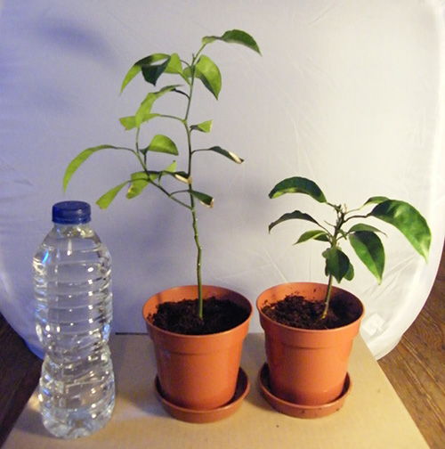 Plants in pots next to bottle of feed
